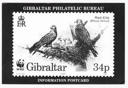 Gibraltar - Philatelic Bureau - Birds, Red Kite - WWF - 1996 - Used - Gibraltar