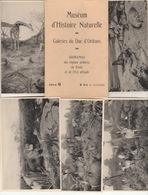 Muséum D'Histoire Naturelle - Galeries Du Duc D'Orléans - Dioramas Régions Polaires, Du Kénia Et Est Africain - - Non Classés