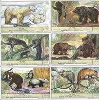 Série De 6 Chromos Liebig LES OURS (scan Verso) - Liebig