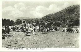 "610 "" AFRICA ORIENTALE PASTORI BENI AMER"" CART ANIM NON SPED. - Postcards"