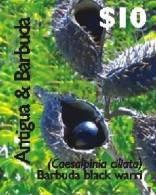 ANTIGUA  & BARBUDA  2992  MINT NEVER HINGED SET OF STAMPS OF FRUITS - BLACK WARRI ; FLORA (   0719 - Végétaux