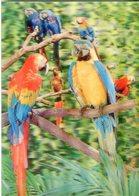 Pappagalli  - Lot.2028 - Cartoline Stereoscopiche