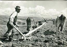 Contadino Che Ara I Campi Con I Buoi - Lot.2039 - Landbouw