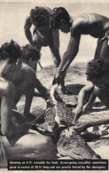 ABORIGINES SKINNING An 8 Ft. OCEAN-GOING CROCODILE For FOOD (NSW) / CHASSE Au CROCODILE / CROCODILE HUNTING (ab709) - Australie