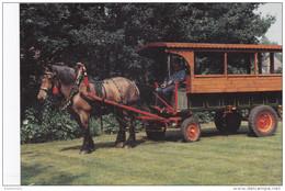 Grote Kaart Groeten Uit Zoersel Huifkar Brabants Trekpaard Horse Paard Cheval Kempen Noorderkempen Voorkempen - Zoersel