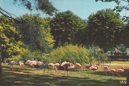 MULHOUSE LE JARDIN ZOOLOGIQUE FLAMANTS ROSES - Pájaros