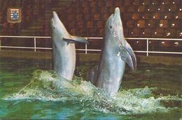 DOLFINARIUM BRUGGE DAUPHINS - Delfines