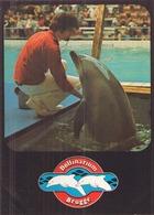 DOLFINARIUM BRUGGE DAUPHIN - Delfines