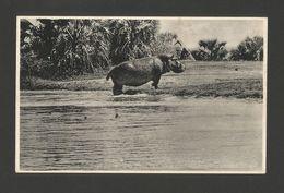 MOZAMBIQUE MOÇAMBIQUE GORONGOZA PARK 1940 Years HIPPOPOTAMUS FAUNA AFRICA - Mozambique