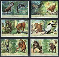 LIEBIG  - FR -  6 Chromos N° 1 à 6 -  Série/Reeks S.1604 - Les Singes - Monk. - Liebig