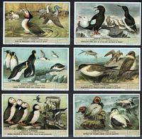 LIEBIG  - FR -  6 Chromos N° 1 à 6 -  Série/Reeks S.1634 - Oiseaux Plongeurs. - Liebig