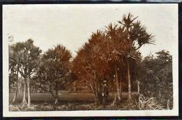 ST. PHILIPPE LES VACOAS (Ile De La Réunion) Gros Plan Sur La Palmeraie Et Animation, RARE Carte Photo. - Autres