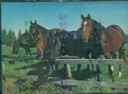 TRIDIMENSIONALI -CAVALLI - Cartoline Stereoscopiche