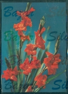 TRIDIMENSIONALI -FIORI - Cartoline Stereoscopiche