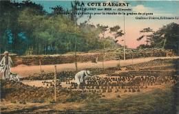 33 Montalivet Sur Mer, Champs D'exploitation Pour La Récolte Des Graines De Pignes, Belle Carte Pas Courante - Sonstige Gemeinden