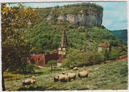 Jura :  BAUME Les MESSIEURS  : L  Abbaye , Mouton - Francia