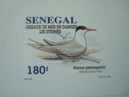 SENEGAL 1993 / 1153-1156 / 4 LUXE PROOFS / BIRDS FAUNA Sternes - Sénégal (1960-...)
