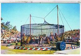 CIRQUE   LIONS     SARASOTA  COUNTY.   FLORIDA     TBE  1M581 - Cirque