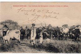 Afrique > Madagascar//LA RENTREE DU TROUPEAU(Bœufs à Bosses Ou Zébus) DIEGO-SUAREZ 21 FEVRIER 1912 - Madagascar