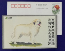 Pyrenean Mountain Dog,Montagne Des Pyrenees,China 2008 World Famous Dog Advertising Pre-stamped Card - Dogs