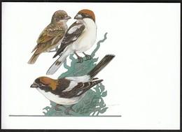 Germany 1998 / Wohlfahrtsmarken Rotkopfwurger / Woodchat Shrikes / Birds - Uccelli