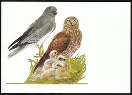 Germany 1998 / Wohlfahrtsmarken Kornweihe / Hen Harrier / Birds - Uccelli