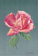 CP - G.DIAKOFF - Barré Et Dayez - Barday - Illustrateurs - Fleur - Rose - Henri Guillot - 1459F - Illustrateurs & Photographes