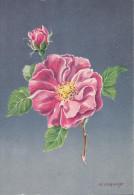 CP - G.DIAKOFF - Barré Et Dayez - Barday - Illustrateurs - Fleur - Rose - Rosa Gallica - 1459G - Illustrateurs & Photographes