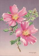 CP - G.DIAKOFF - Barré Et Dayez - Barday - Illustrateurs - Fleur - Rose - Rosa Mirifica Sacremento Rose  - 1459i - Illustrateurs & Photographes