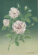 CP - G.DIAKOFF - Barré Et Dayez - Barday - Illustrateurs - Fleur - Rose - Yvonne Rabier - 1459M - Illustrateurs & Photographes