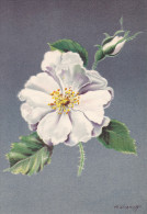 CP - G.DIAKOFF - Barré Et Dayez - Barday - Illustrateurs - Fleur - Rose - Rosa Alba - 1459O - Illustrateurs & Photographes