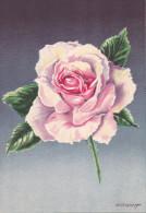 CP - G.DIAKOFF - Barré Et Dayez - Barday - Illustrateurs - Fleur - Rose - Madame Butterfly - 1459T - Illustrateurs & Photographes
