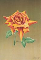 CP - G.DIAKOFF - Barré Et Dayez - Barday - Illustrateurs - Fleur - Rose - Catherine Pechtold - 1459V - Illustrateurs & Photographes