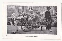 Menen: Maraïchers Flamands. (Erster Weltkrieg, 1915) - Menen