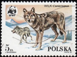 POLAND - Scott #2678 Wolves (*) / Used Stamp - W.W.F.
