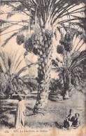 Afrique Algérie  (Scènes & Types) La Cueillette De Dattes (- Editions :CAP C.A.P 1272  )*PRIX FIXE - Algérie