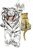 [MD1610] CPM - TIGRI - DISEGNO DI NANI TEDESCHI - NV - Tigri