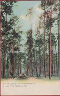 Old Original Postcard 1904 Florida Pine Barrens Chromatography Rotograph Co. (In Very Good Condition) - Etats-Unis