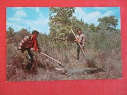 Seminole Indians On Gator Hunt  Everglades Fl. ------ Ref 2950 - Native Americans