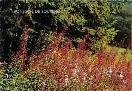 CPM - Bonjour De SOURBRODT - Weismes