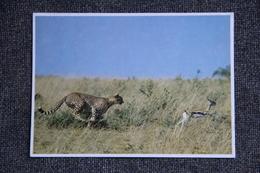Gazelle De THOMSON Et Guépard - Andere