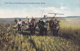Postcard First Year On The Homestead Canadian North West Harvesting The Crop [ Farm / Farming Interest ] My Ref  B12106 - Cultivation
