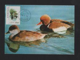 MAXIMUM CARD PORTUGAL DUCK WILD LIFE TEJO BIRD BIRDS 1982 ALHANDRA Postmark - Maximum Cards & Covers