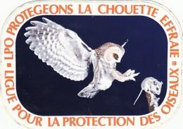 Autocollant  -  PROTEGEONS LA CHOUETTE EFFRAIE - Autocollants