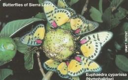 Sierra Leone - Butterflies - Euphaedra Cyparissa - Sierra Leone