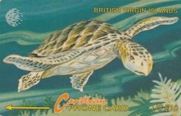 Virgin Islands - BVI Wild Life - Turtle - 23CBVD - Virgin Islands