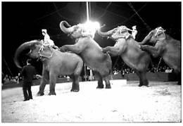 Cirque Bouglionne Les éléphants - Reproductions