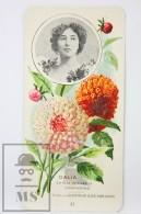 Old Modernist Trading Card / Chromo Flower - Dahlia & Model - Jaime Boix Nº 37 - Documentos Antiguos