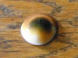 Oeil De Sainte Lucie Escargot - Seashells & Snail-shells