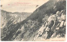 POSTAL  -LES PYRÉNÉES ORIENTALES  -FRANCIA  - LE CANIGOU-ENTRÉE DE LA FORÉT DE BALATG - Roussillon